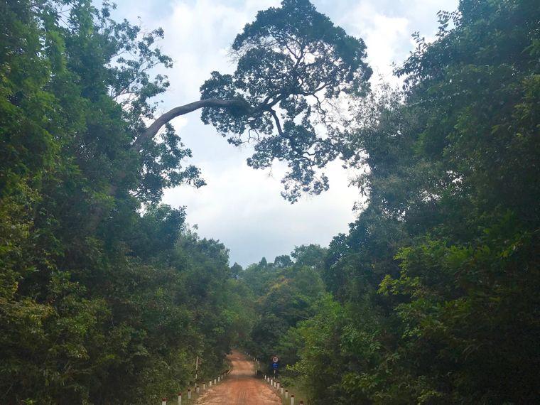 Der Weg zum Star Fish Beach führt Reisende über buckelige rote Sandstraßen durch dicht bewachsene grüne Hügel.