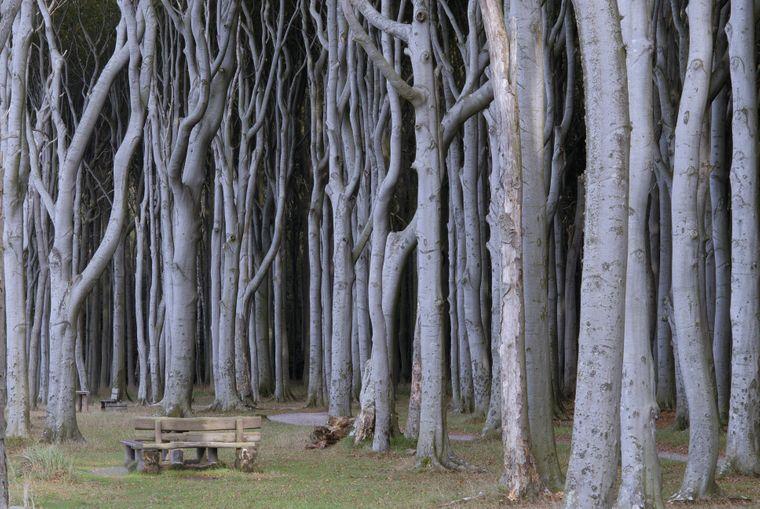 Der Gespensterwald bei Nienhagen – mystisch, oder?