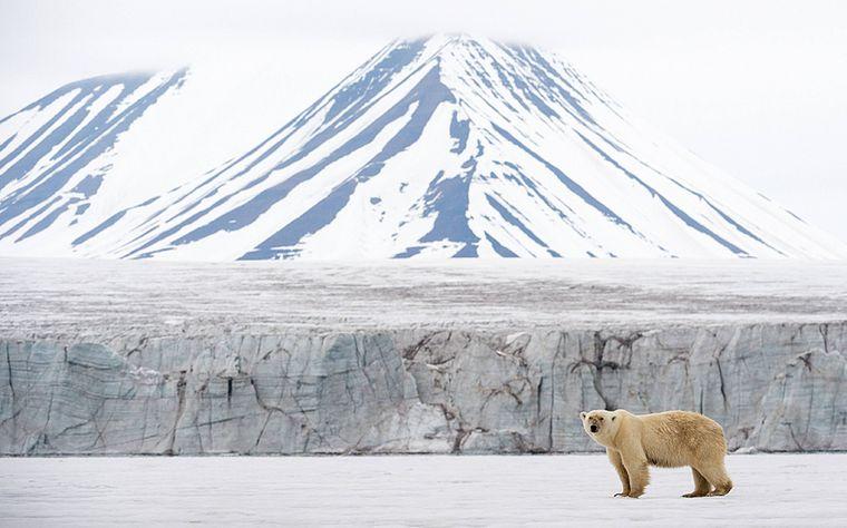 Eisbär vor einem Gletscher und schneebedeckten Berg auf Spitzbergen.