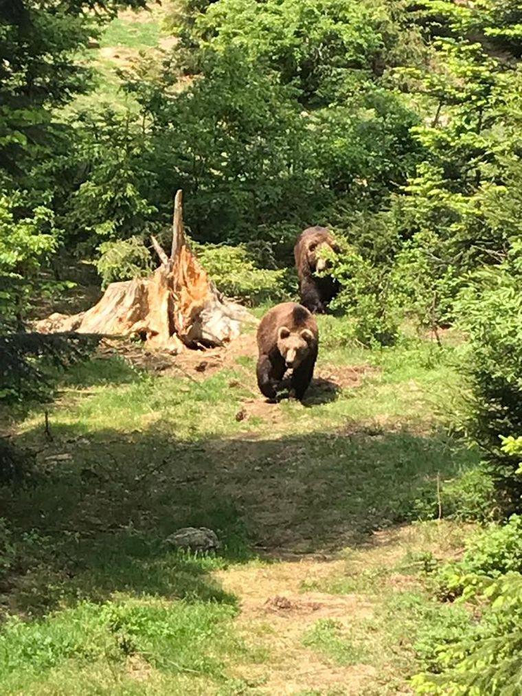 Wer im Bayerischen Wald unterwegs ist, kann am Nationalpark nicht vorbei!