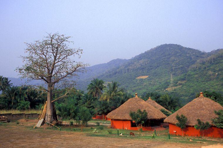 Regenwald, Traumstrände, Savanne, Berge: Ghana ist unglaublich vielfältig. Und auch, wenn es kein klassisches Safari-Reiseziel ist – auch wilde Tiere können in dem Land gut beobachtet werden.