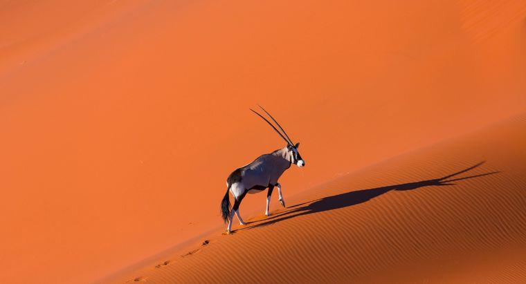 Der Spießbock (auch Oryxantilope) ist das Wappentier Namibias – und vielleicht dein Weggefährte durch die feuerrote Namib.