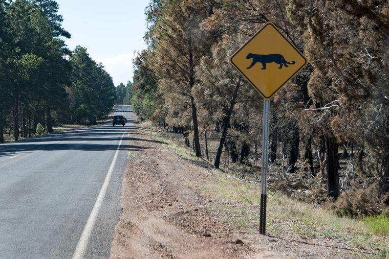 In Arizona und Colorado gibt es Pumas, ein Schild warnt Autofahrer vor den Tieren.