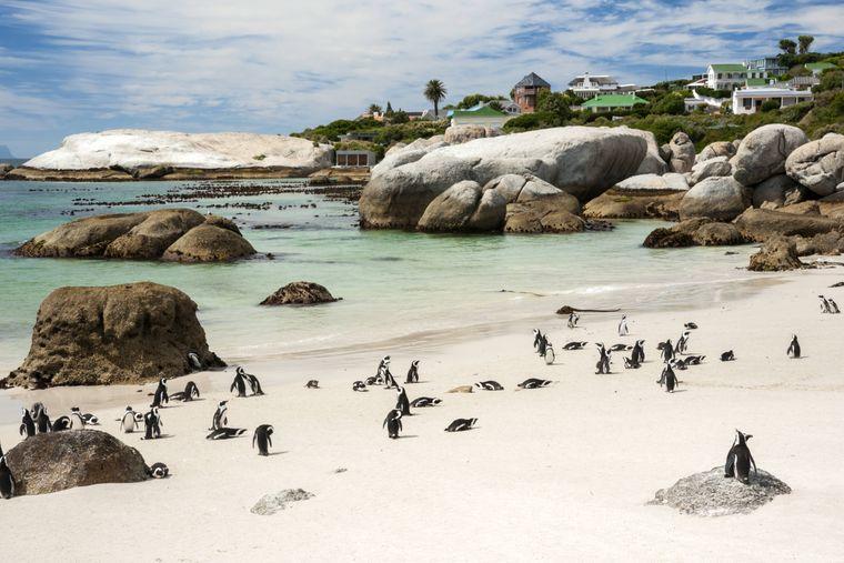 Der Boulders Beach liegt am südlichsten Zipfel Südafrikas.