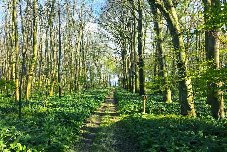 Wald auf der Greifswalder Oie.
