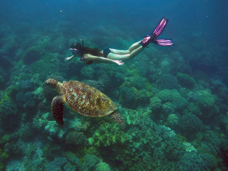 Rund um Apo Island kannst du mit Meeresschildkröten tauchen.