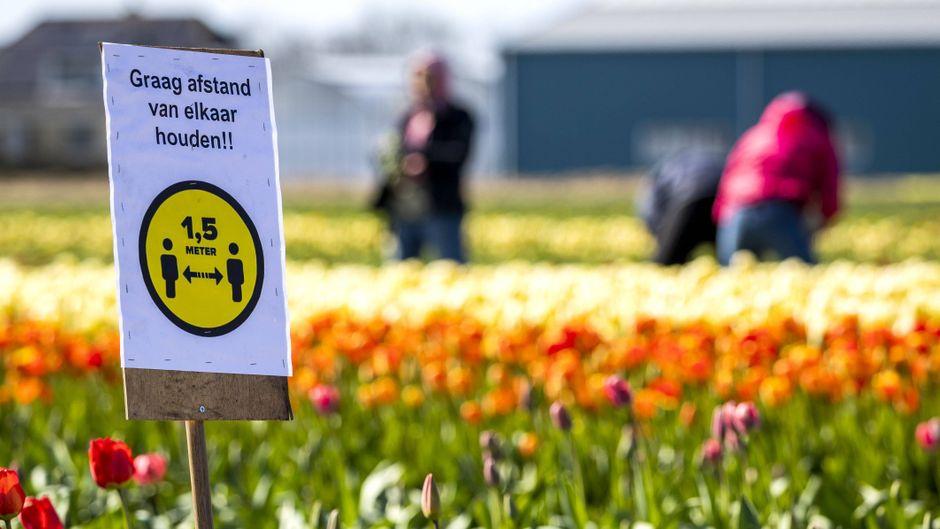 Eineinhalb Meter Abstand auch auf den Tulpenfeldern in den Niederlanden.