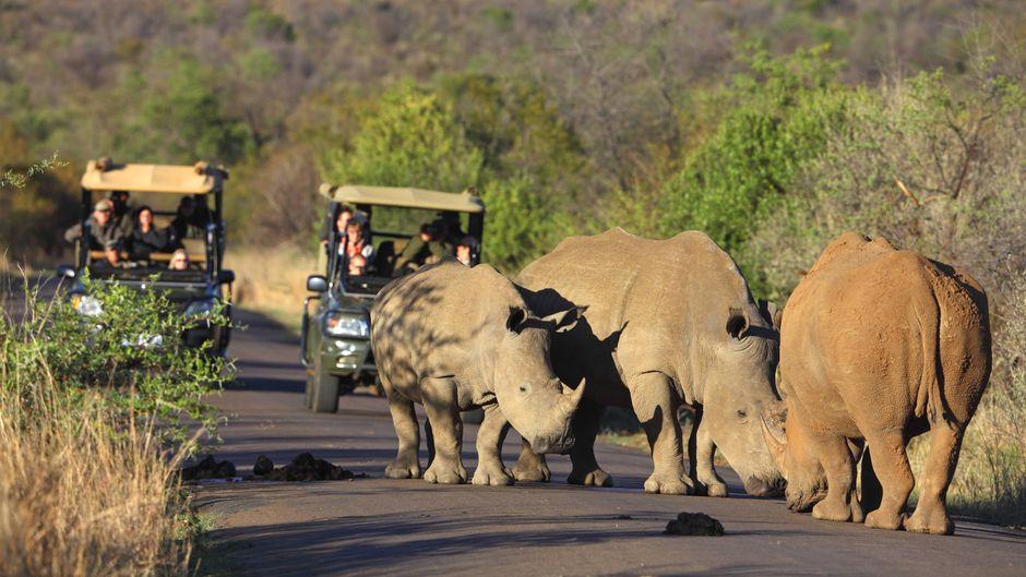 Nashörner sind friedfertige Tiere, solange sie sich nicht provoziert fühlen. Auf Safari gilt deshalb: Abstand halten!