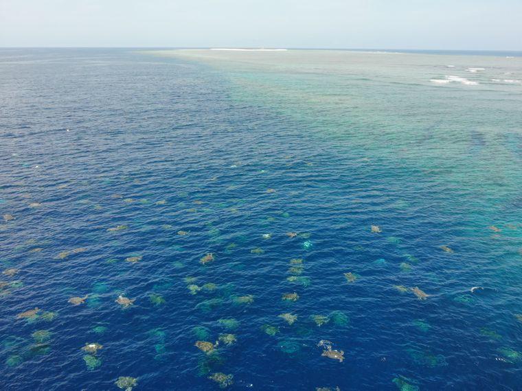 Die Drohnenvideos zeigen Tausende Grüne Meeresschildkröten.