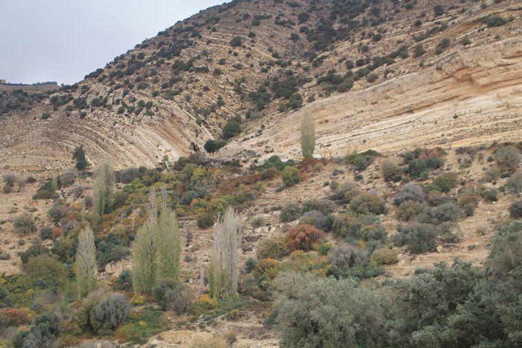 Im Biosphärenreservat Dana gibt es rund 800 verschiedene Pflanzen.