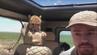 Schockmoment: Der Gepard ist in Tansania in das Safariauto gesprungen.