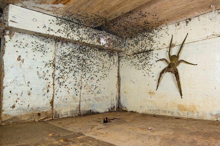 Nichts für Menschen mit Arachnophobie: Dieses Bild bot sich Gil Wizen aus Kanada. Er fotografierte die extrem giftige Brasilianische Wanderspinne, die ihren Nachwuchs beschützt und etwa so groß ist wie eine Hand.