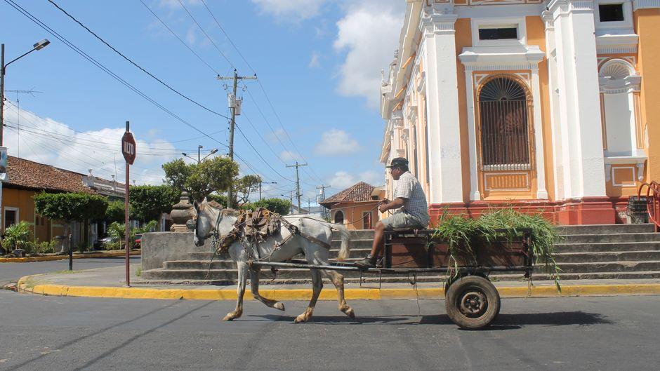 Ein Karren mit Tabakblättern fährt durch Esteli.