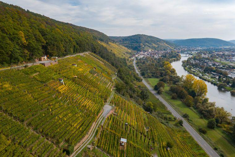 Der Fränkische Rotweinwanderweg führt zwischen Spessart und Odenwald durch das Maintal. Unterwegs laufen Wanderer auch immer wieder direkt am Main entlang.