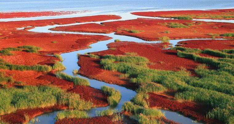 Der roter Strand von Panjin.