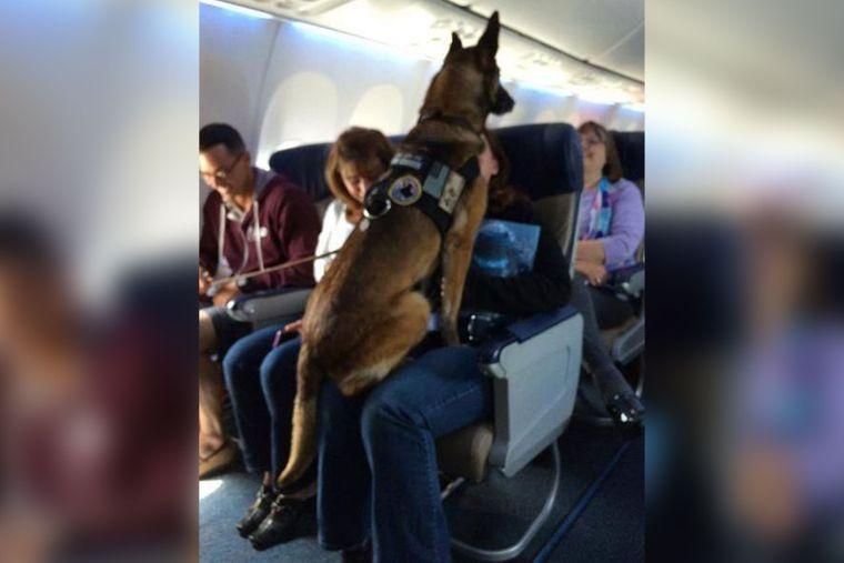 Hund Corporal Kiddy im Flughafen.