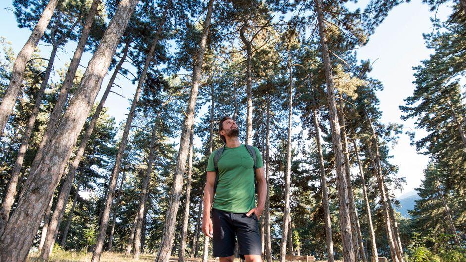Waldbaden ist eine neue Bewegung, die sich schnell auf der ganzen Welt durchgesetzt hat.
