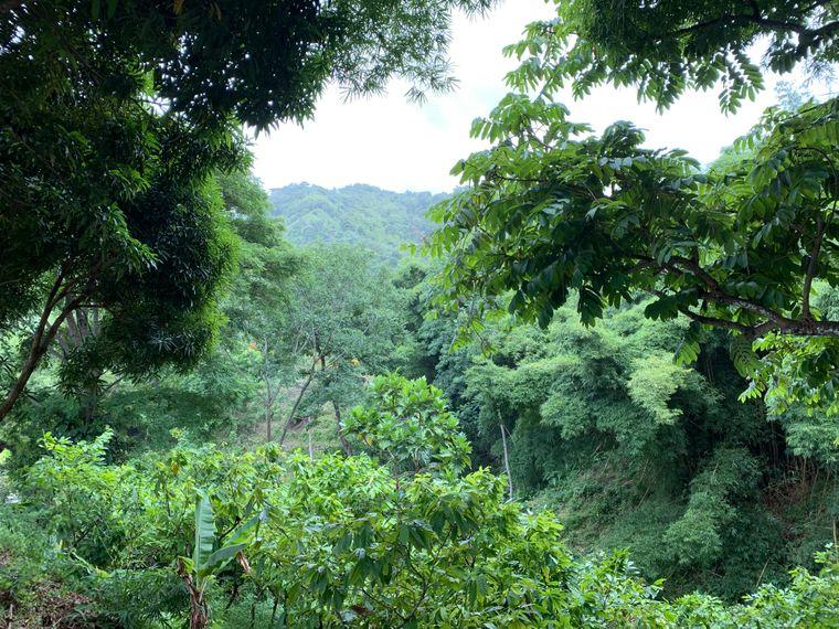 Regenwald auf Tobago.