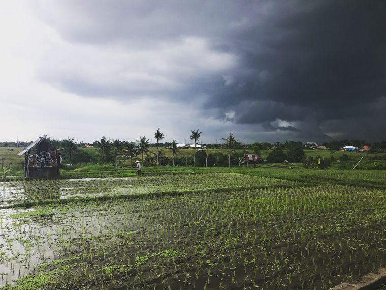 Die Reisfelder sind wunderschön anzusehen – ein Ausflug zu ihnen lohnt sich ganz sicher.