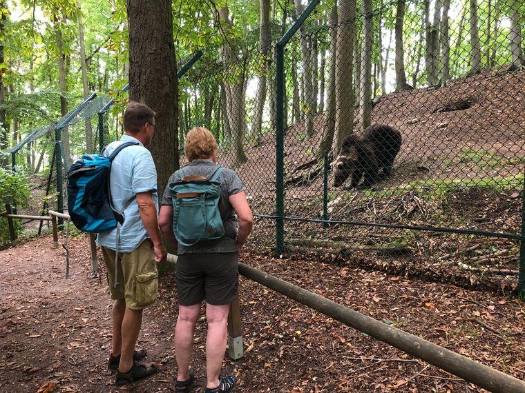 Besucher Auge in Auge mit einem Bären im Bärenpark.