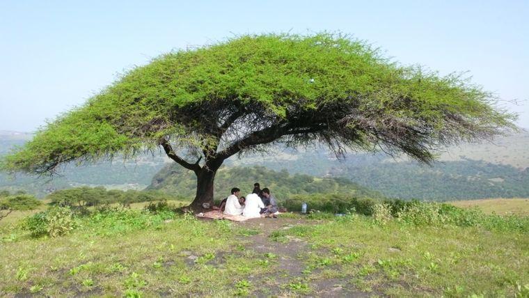 Ein schattiges Plätzchen unter einem Baum am Rande des Dhofar-Gebirges