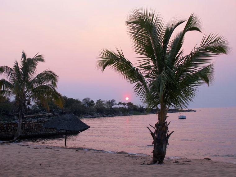 In der Isanga Bay kannst du unter einer Palme einem Fischadler beim Jagen zuschauen.