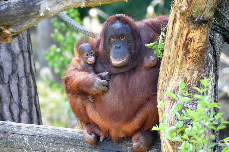 Affen, samt Nachwuchs, siehst du im Rostocker Zoo, genauer im Darwineum.