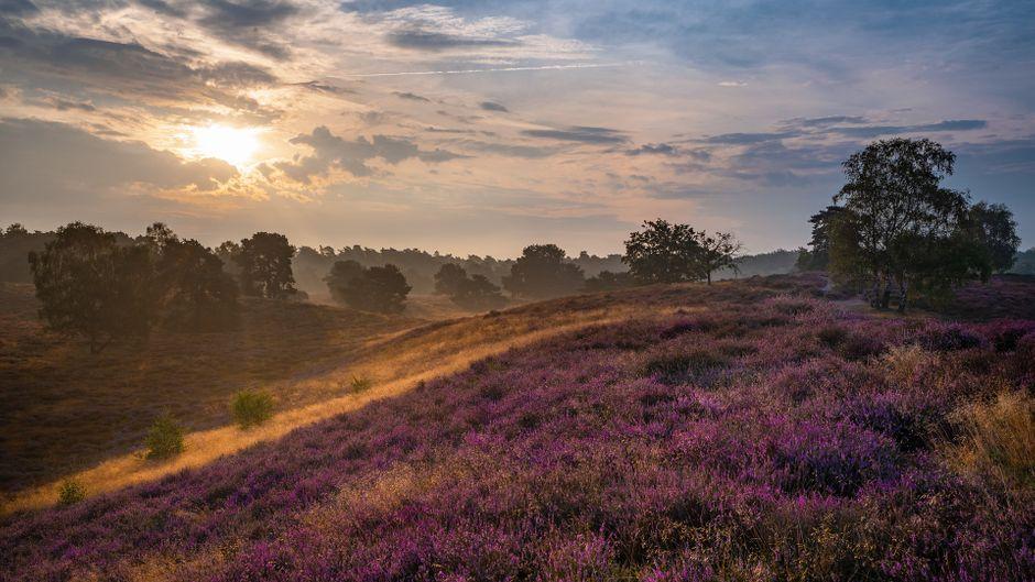Lünebruger Heide