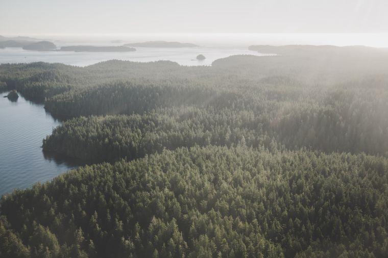 Die bewaldeten Buchten am Pazifik bieten grandiose Aussichten beim Flug zur Hot Springs Cove.