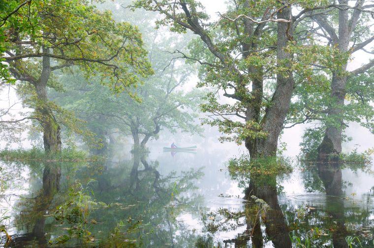 Im Soomaa-Nationalpark in Westestland kannst du dich zeitweilig nur mit Kanu, Kajak oder sogar Einbäumen fortbewegen.