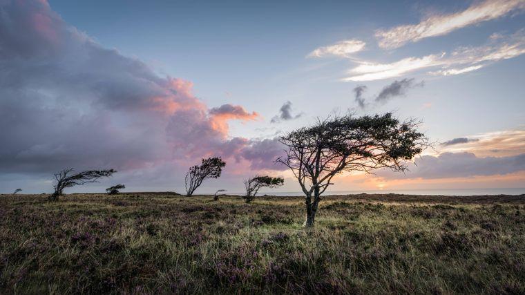 Besser kann der Tag nicht beginnen als mit einem Sonnenaufgang in der Braderuper Heide.