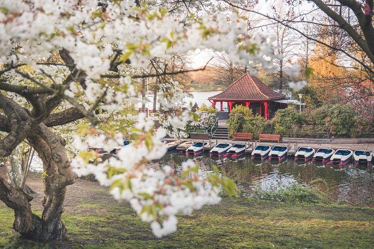 Ein Park in Hamburg. Schau mal hin: Ob es da auch einen Obstbaum gibt?