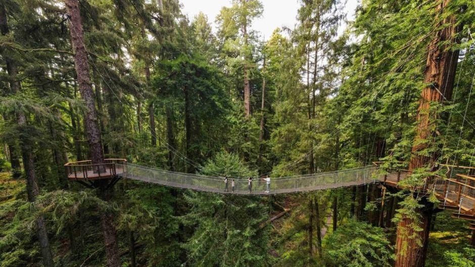 Eine Besuchergruppe auf dem neuen Redwood Skywalk.