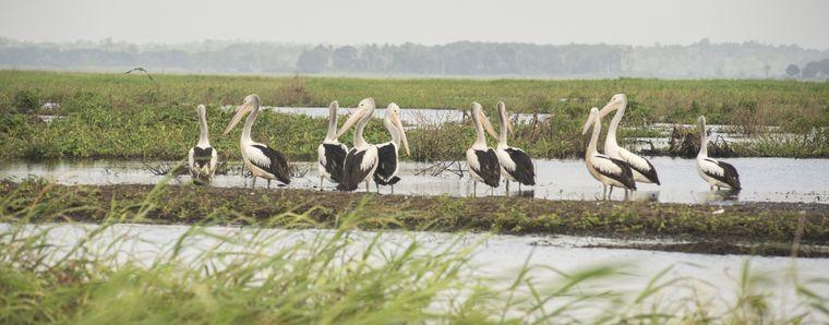 Die lange Küstenlinie des Lake Murray und der See selbst sind der Lebensraum zahlreicher Vögel.