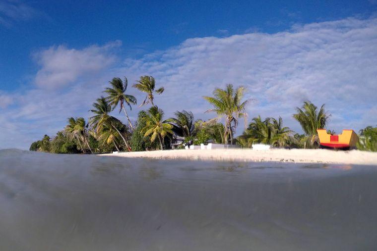 Palmen auf Tuvalu im Pazifik.