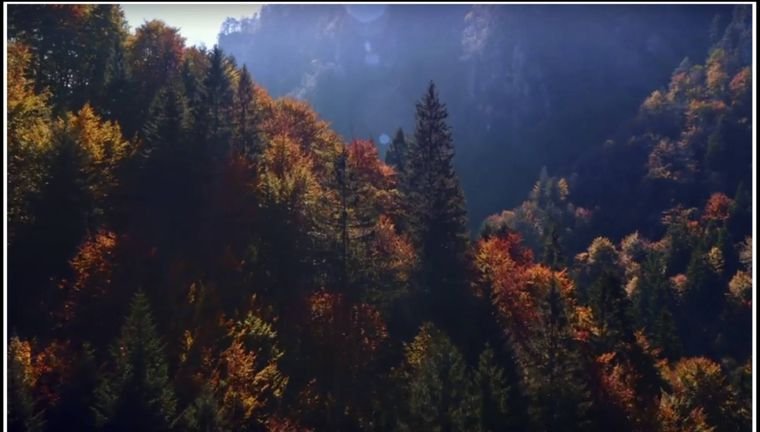 """Die Wälder von Burkittsville dienten als Drehort für """"Blair Witch Project""""."""