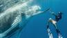 Der Fotograf David Edgar hat in Tonga unglaubliche Fotos von einem Buckelwal und Tauchern geschossen.
