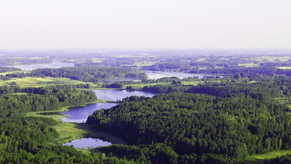 Die schönen Wälder Litauens.