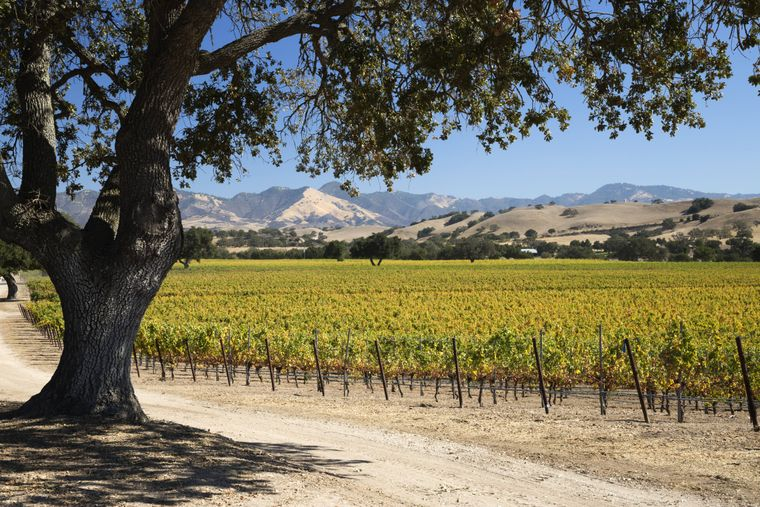 Die Weinregion Santa Ynez Valley im Santa Barbara County.