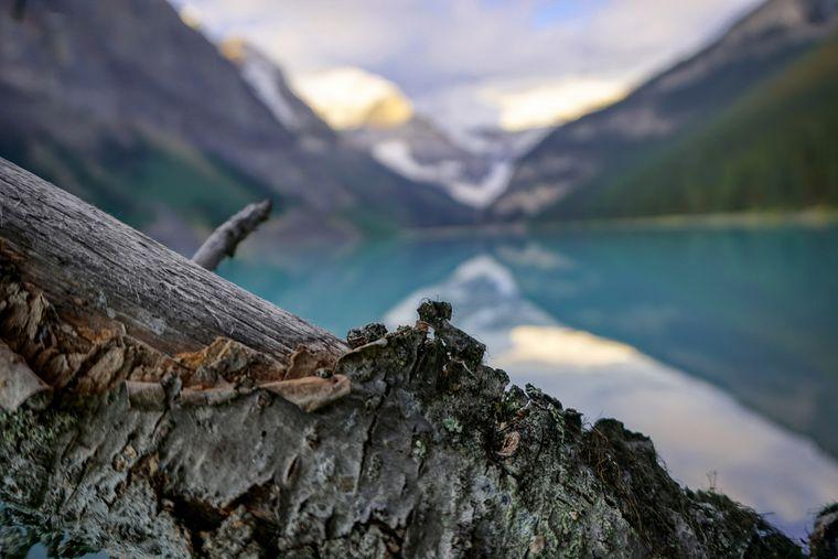 Nahaufnahme der Rinde eines umgestürzten Baumes am Lake Banff in Kanada.
