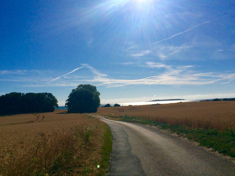 Der Weg zum Glück: Die schmale Teerstraße führt vom Dorf Dalby (Fünen) durch Kornfelder direkt ans Meer.