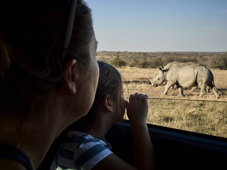 Nashörner auf einer Safari zu sehen ist ein ganz besonderer Moment.