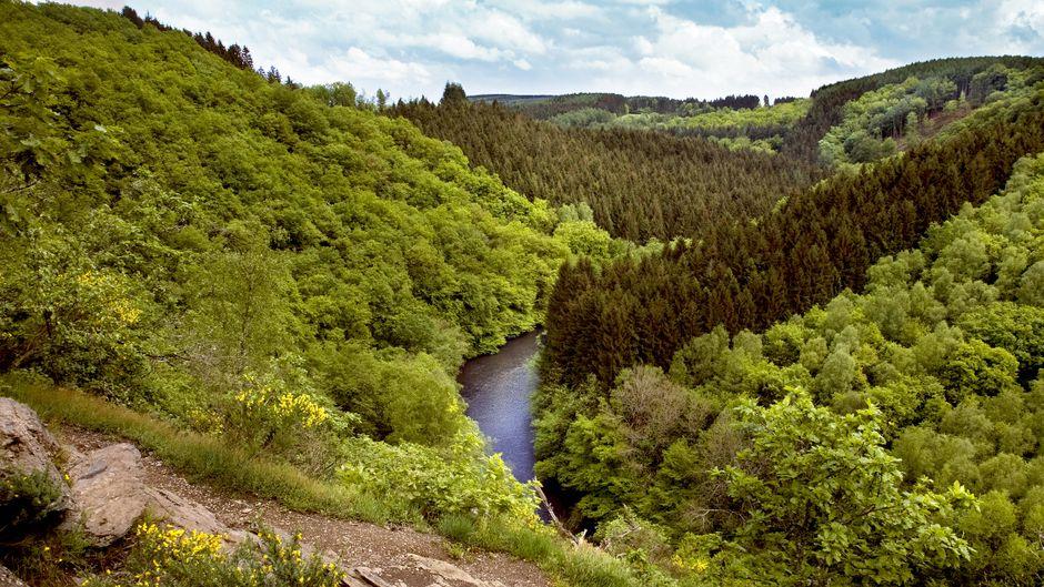 Wanderweg in den Ardennen in Belgien mit Fluss