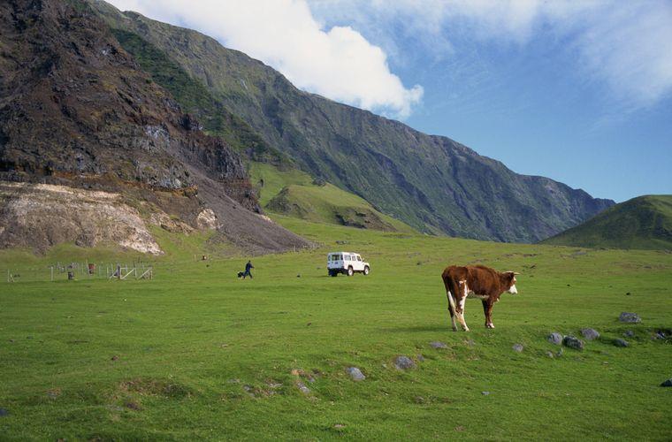 Kaum Menschen, ein paar Kühe – mehr ist nicht los auf Tristan da Cunha, dem abgelegensten bewohnten Ort der Welt.