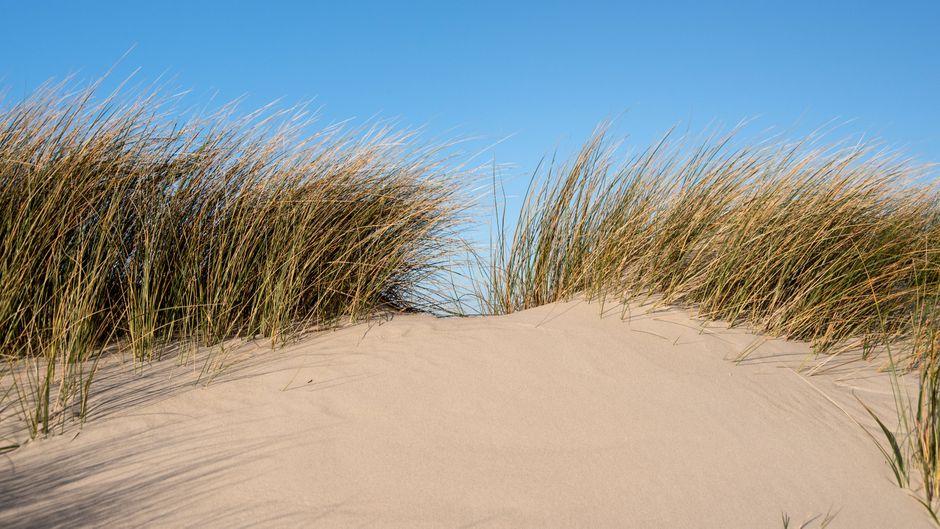 Dünen am Strand von Amrum.