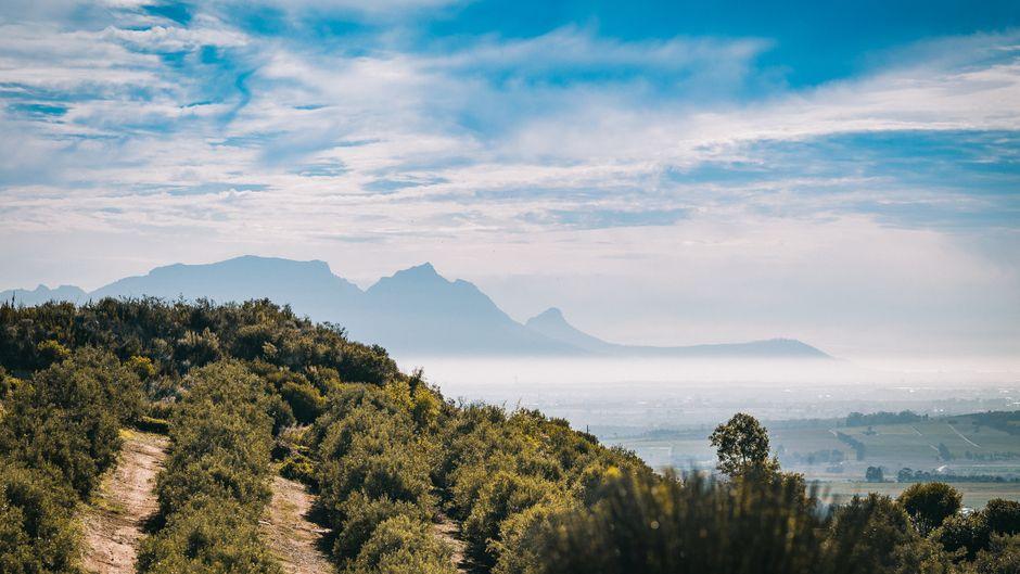 Diese Kontraste sind unglaublich schön: Einige Deutsche betreiben in der Nähe von Kapstadt seit Jahrzehnten Weinfarmen. (Symbolfoto)