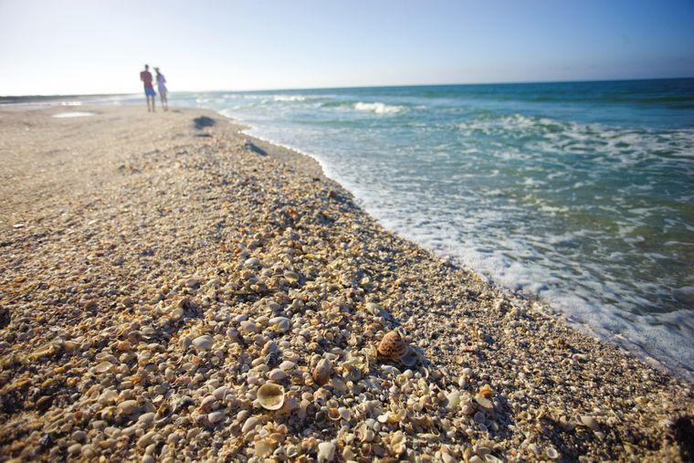 Am Strand von Sanibel liegen unzählige Muscheln.