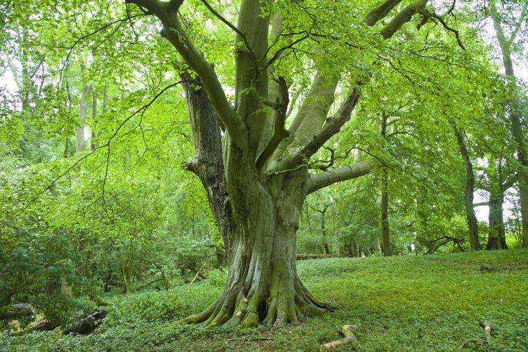 Im Wychwood Forest in England sollen sich seltsame Dinge abgespielt haben.