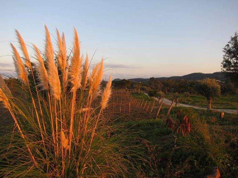 Im Hinterland der Alentejo-Küste wechseln sich Korkeichenwälder und Weinfelder ab.