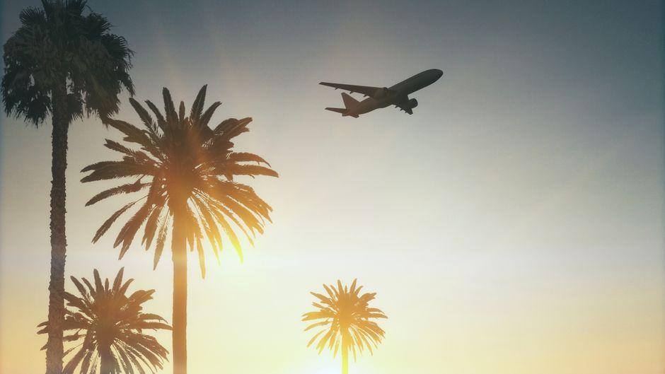 Flugzeug über Palmen. Was ändert sich für Reisende mit Aufhebung der pauschalen Reisewarnung?